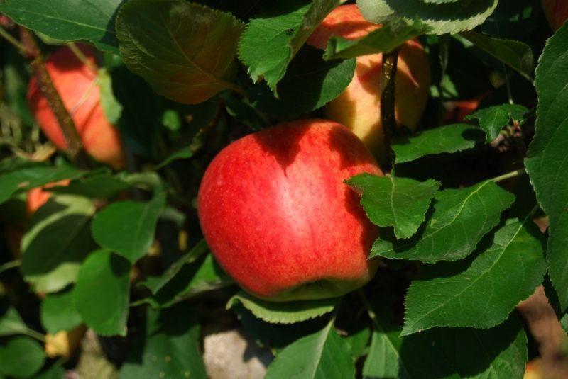 Agricoltura: oltre 450 milioni euro