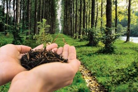 Epson green printing: Ecologia e Risparmio nelle stampe
