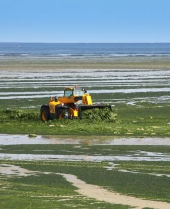 Algacarta Favini: dalle alghe della Laguna Veneta a quelle della Bretagna