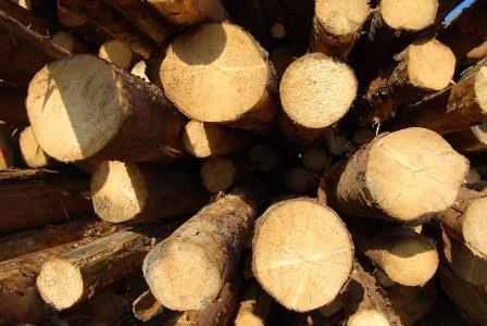 Le foreste italiane per la ripresa economica