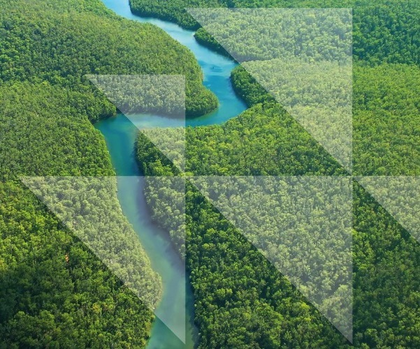 Deforestation in supply chain leaves business exposed