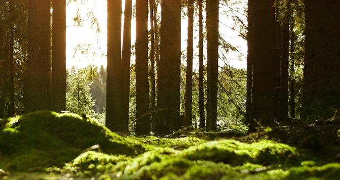 Gruppo IKEA dimostra che proteggere l'ambiente fa bene al business