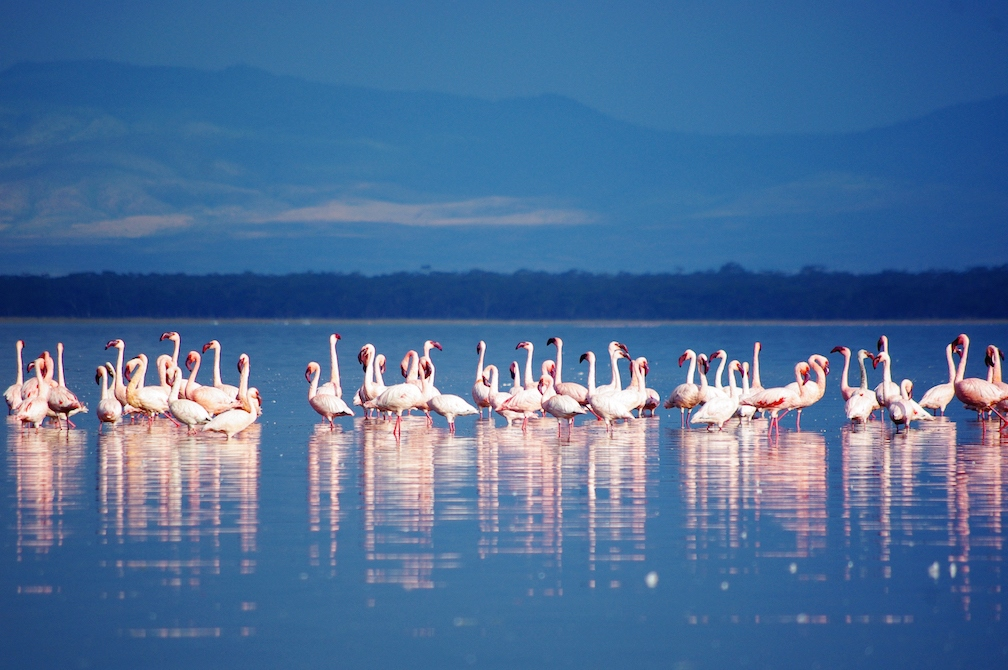 Kenya: Lago Nakuru secondo per National Geographic Travel