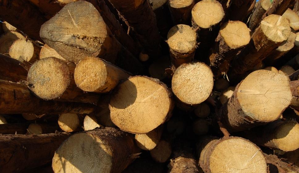 Accordo Interregionale su prelievo legno e su filiera legno