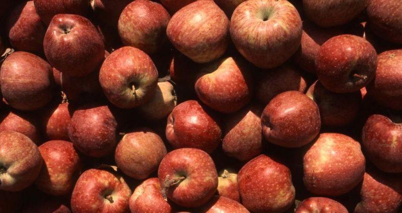 COMPAG: agricoltura italiana, eccellenze da valorizzare