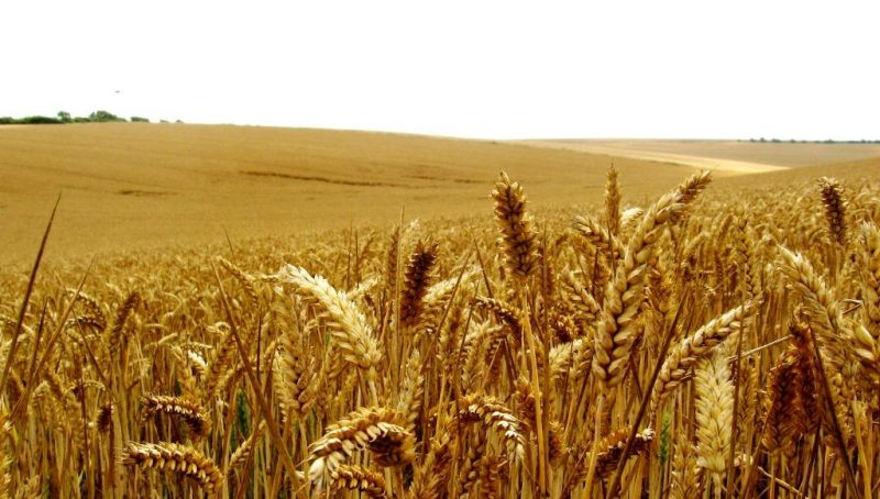 ENEA: efficienza in agricoltura vale 70 percento risparmi