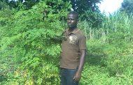 Food Forest Moringa: nuove piantagioni
