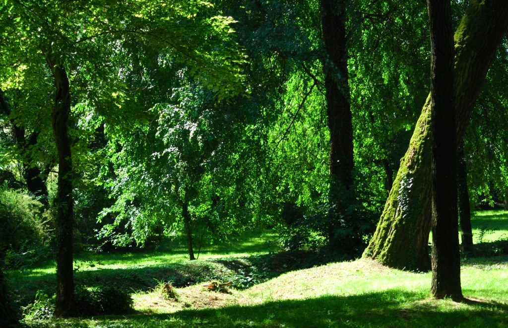 FederlegnoArredo e AFI per riforestazione