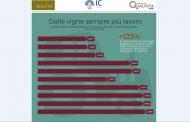 Bilanci aziende vino e uva