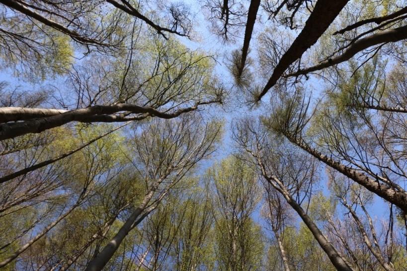 2020 anno delle foreste