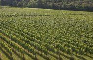 Cambiamento climatico e viticoltura