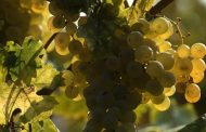 Il vino secondo Slow Food