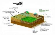 Preservare suolo: fertilità e biodiversità