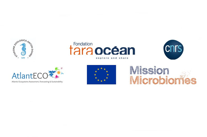 Oceani, scoprire il microbioma