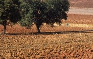 Milleproroghe per agricoltura