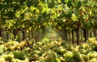 Consorzio Tutela Vini d'Abruzzo e Intesa Sanpaolo